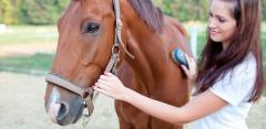 2- или 3-часовые конные прогулки и фотосессия в конном клубе «Усадьба»