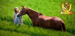 Свидание на конном ранчо, прогулка верхом, катание в экипаже