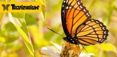Билеты для детей и взрослых на выставку бабочек и беспозвоночных