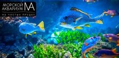 Экскурсия в «Морской аквариум на Чистых прудах»