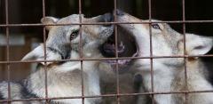 Экскурсия для детей и взрослых в зоостудию животных-актеров «Ковчег»